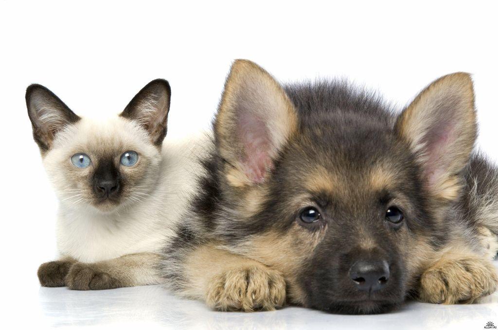Стерилизация собак: ЗА и ПРОТИВ этого метода