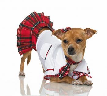 Пошив одежды для собак
