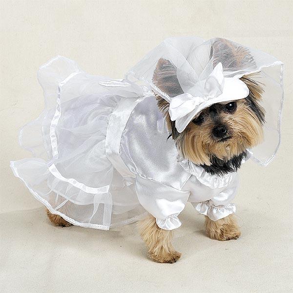 Разделы gt одежда для собак недорого