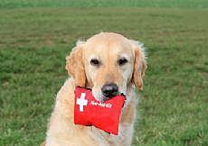 Чумка у собак. Симптомы и лечение
