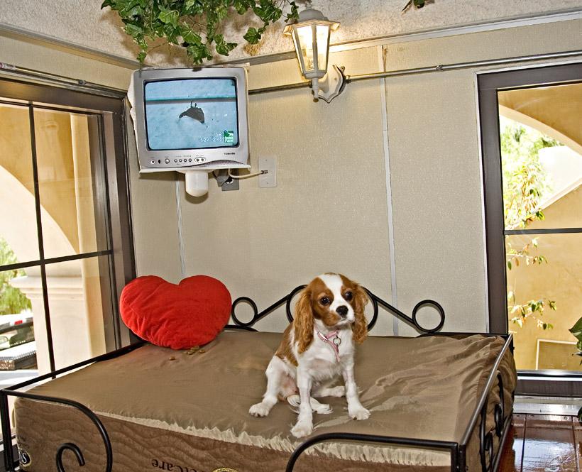 Отель для домашних животных
