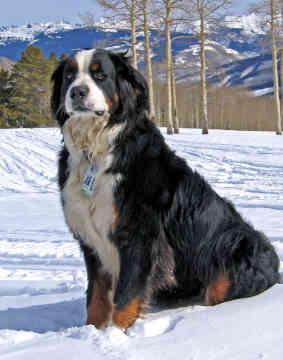 Собак gt крупные породы собак
