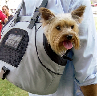 сумки для собак