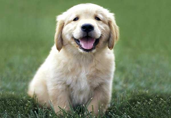 Жизни gt как приучить щенка к кличке