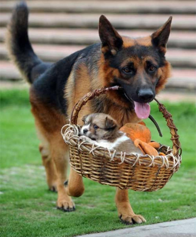 Когда можно забирать щенка