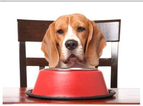 диетолог для собак