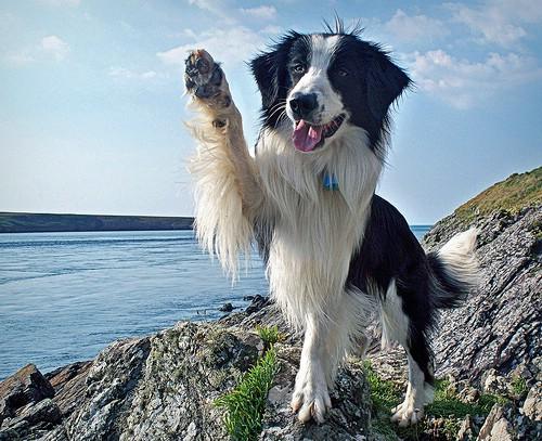 Собака сапоги своими руками