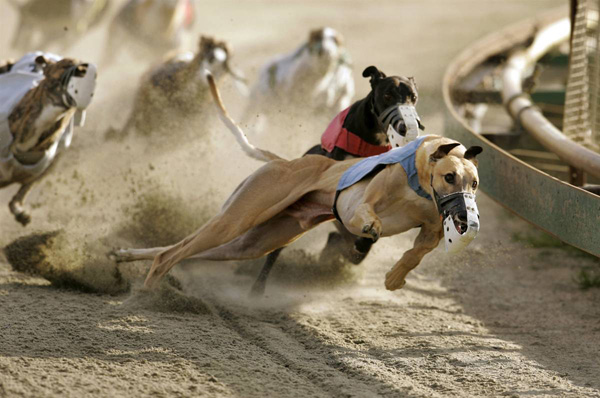 Анализатор собачьих бегов