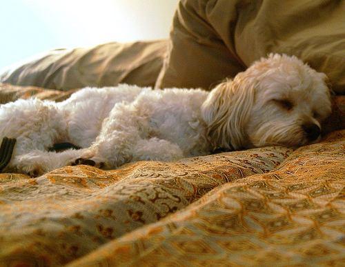 Энтерит у собак: причины,