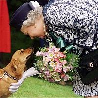 Собаки Елизаветы Второй, королевы Великобритании