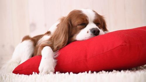 Кнут ни к чему, только пряники или как приучить щенка спать на своем месте?
