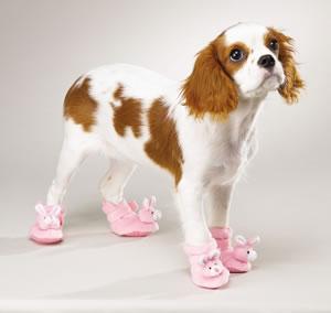 Босоножки для собак