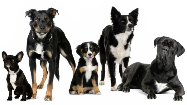 Породы собак по алфавиту