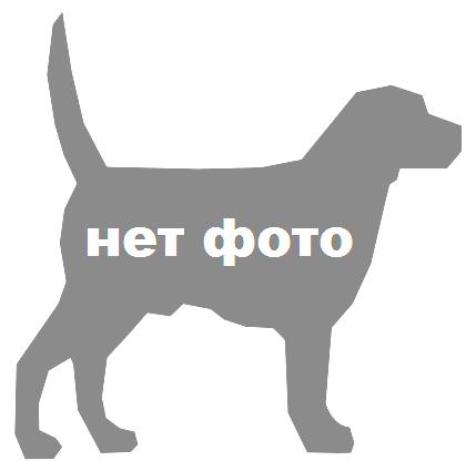 Питомник  ПАПИЙОНОВ --  РУРИВЕЙ