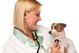 ветеринарные врачи