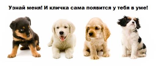 клички собак