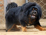 Породы собак для охраны