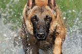 Породы собак для защиты