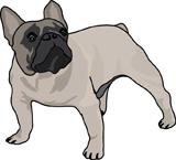 Услуги для владельцев собак